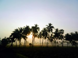 Sunrising from rice fields -Travel information, planning, experience sharing blog
