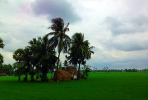 Teki rice fields -Travel information, planning, experience sharing blog